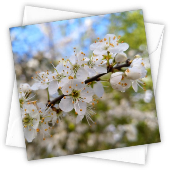 Cardtastic: Hedgerow Blossom Greeting Card