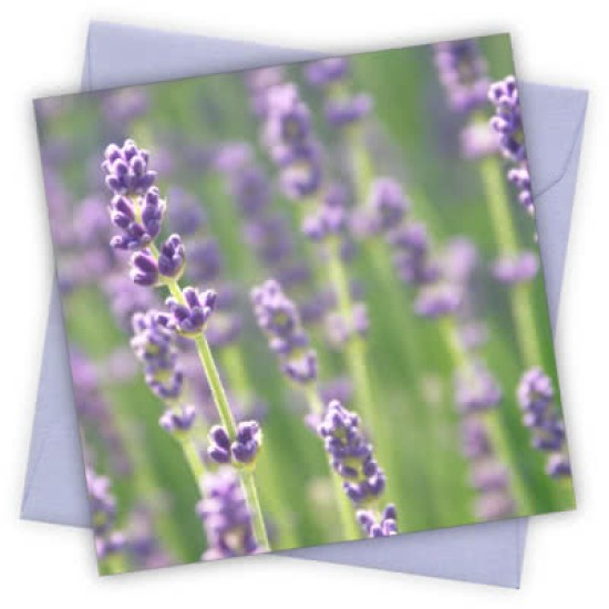 Cardtastic: Lavender Greeting Card